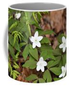 Wood Anemone Blooming Coffee Mug