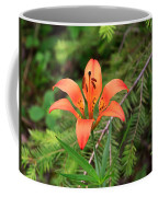 Wood Lily Also Called Prairie Lily Or Western Red Lily Coffee Mug