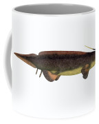 Xenacanthus Fish On White Coffee Mug