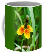 Yellow And Orange Clasping Coneflower Coffee Mug