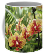 Yellow And Red Spotted Phalaenopsis Orchids Coffee Mug