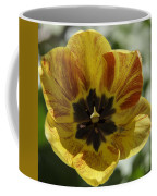 Yellow And Red Tulip Center Squared Coffee Mug