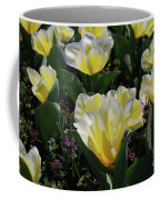 Yellow And White Tulips Flowering In A Garden Coffee Mug