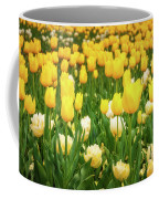 Yellow And White Tulips In Canberra In Spring Coffee Mug