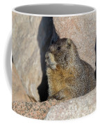 Yellow-bellied Marmot Poses For Pictures Coffee Mug
