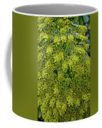 Yellow Blossoms Of Green Aeonium In Huntington Desert Garden In San Marino-california  Coffee Mug
