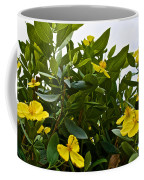 Yellow Poppy Bush Flowers At Pilgrim Place In Claremont-california Coffee Mug