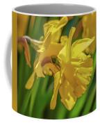 Yellow Daffodil May 2016. Coffee Mug