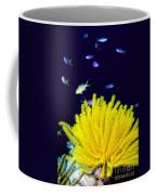 Yellow Feather Star Coffee Mug