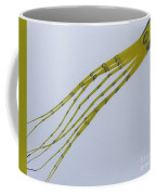 Yellow Fellow Coffee Mug