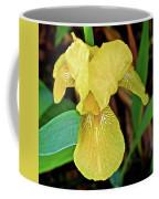 Yellow Iris At Pilgrim Place In Claremont-california Coffee Mug