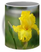 Yellow Iris Flowers Art Prints Cards Irises Summer Garden Landscape Coffee Mug