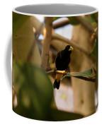 Yellow-rumped Cacique 3 Coffee Mug