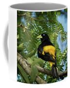 Yellow Rumped Cacique Coffee Mug