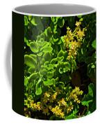 Yellow Sedum At Pilgrim Place In Claremont-california Coffee Mug