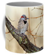 Yellow-shafted Northern Flicker Coffee Mug