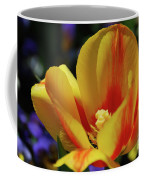 Yellow Tulip Blossom Streaked  With Red In The Spring Coffee Mug