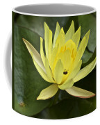 Yellow Waterlily With A Visiting Insect Coffee Mug
