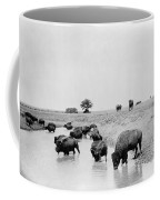Yellowstone: Bison, C1905 Coffee Mug