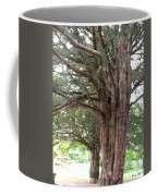 Yew Tree Entrance Coffee Mug
