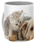 Yorkshire Terrier And Tabby Kitten Coffee Mug