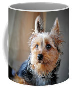 Yorkshire Terrier Dog Pose #3 Coffee Mug