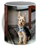 Yorkshire Terrier Dog Pose #6 Coffee Mug