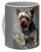 Yorkshire Terrier Puppy Coffee Mug
