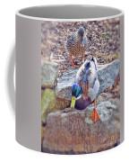 You Go First - Male And Female Mallard Ducks Coffee Mug