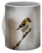 Young American Golden Finch 1 Coffee Mug