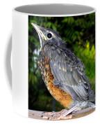 Young American Robin Coffee Mug