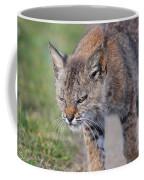 Young Bobcat 03 Coffee Mug