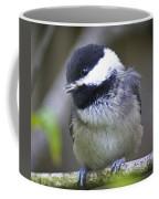 Young Chickadee  Coffee Mug