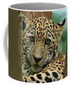 Young Jaguar Coffee Mug