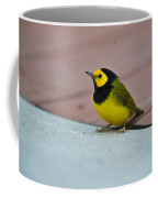 Young Male Hooded Warbler 1 Coffee Mug