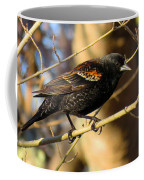 Young Male Red-winged Black Bird Coffee Mug