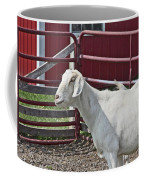 Young Old Goat White And Grayish Red Fence And Gate Barn In Close Proximity 2 9132017 Coffee Mug