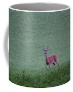 Young Pomfret Summer Buck Coffee Mug