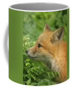 Young Red Fox In Profile Coffee Mug