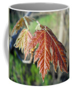 Young Red Maple Leaf In May Coffee Mug