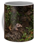 Young Wild Turkeys Coffee Mug