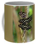 Zebra Butterflies Hanging On Coffee Mug