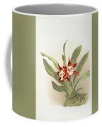Zygopetalum Burtii Coffee Mug