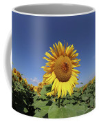 Bee On Blooming Sunflower Coffee Mug