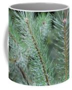 Moist Pine Tree Leaves With Water Droplets. Coffee Mug