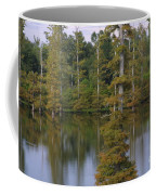 Tennesse Cypress In Wetland  Coffee Mug