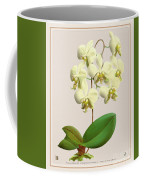 Orchid Vintage Print On Tinted Paperboard Coffee Mug