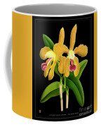 Vintage Orchid Print On Black Paperboard Coffee Mug