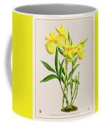 Orchid Vintage Print On Colored Paperboard Coffee Mug