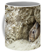 Cottontail Rabbit Coffee Mug by Michael Chatt